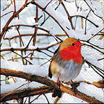 Servietten, Robin in a winter Tree